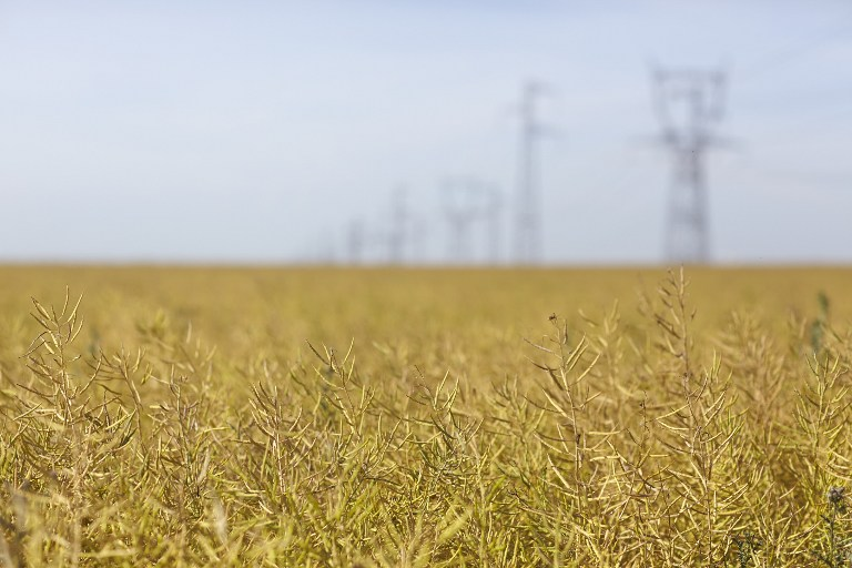 Telefônica takes private 4G network to Brazil bioenergy group