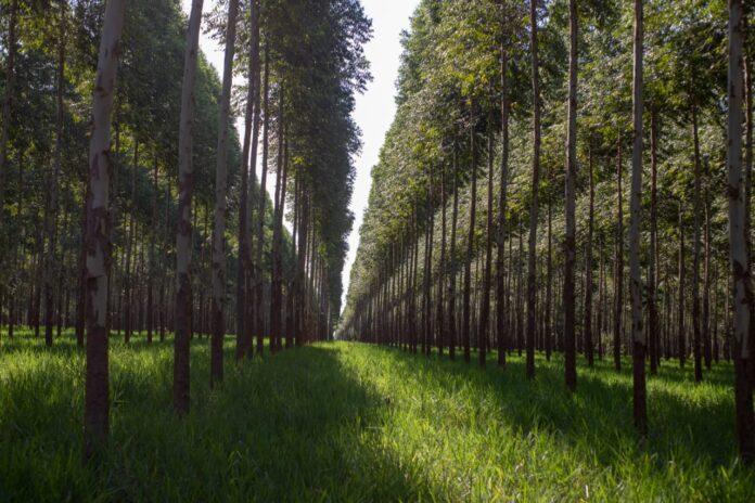 Paraguay iniciará la implementación del programa de certificación de biomasa en las industrias
