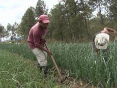 Honduras govt. rubberstamps Bank Austria irrigation loan