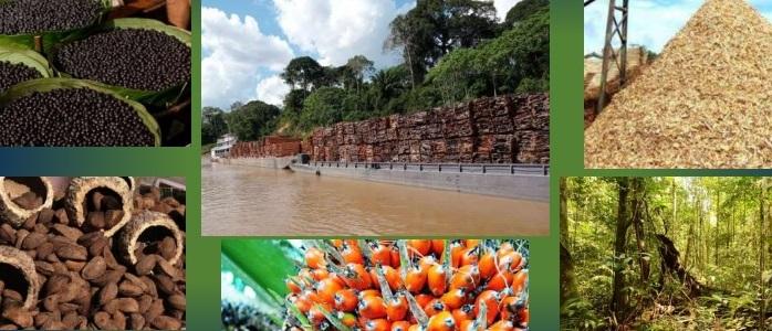 Proyecto brasileño apunta a potencial energético de la biomasa