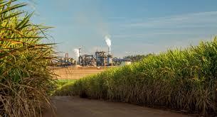 Nine groups in running for Bioenergy sale