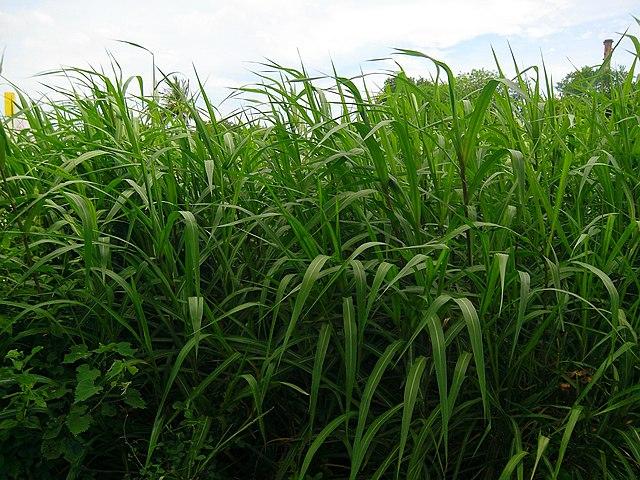 Brasil espera 160TWh de electricidad al año de residuos agroindustriales
