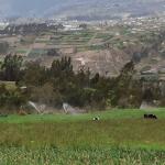 Ecuador set to tender 6,500ha Chiquicahua irrigation project
