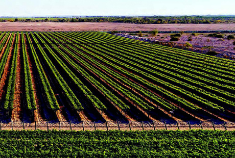 Grupo latinoamericano agroindustrial expande préstamos verdes