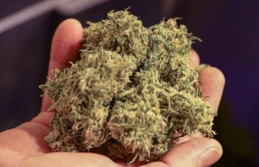 La industria del cannabis en Colombia: Todo lo que hay que saber
