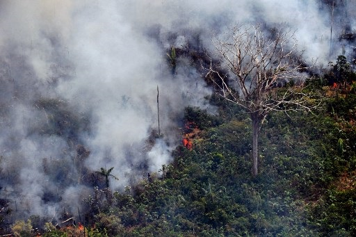 Global Amazon outcry prompts joint South American action