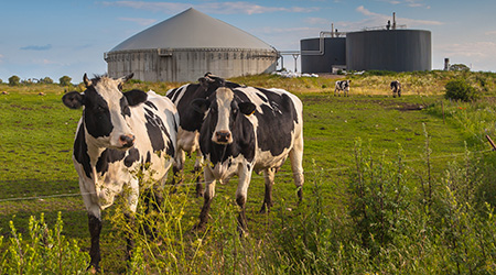 Brazil's biogas industry set for strong growth