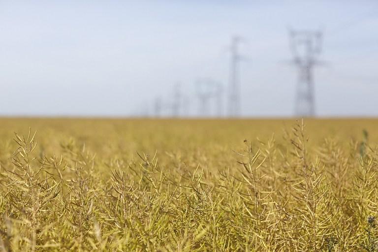 Consorcio brasileño de agricultura digital sigue con interés a Argentina