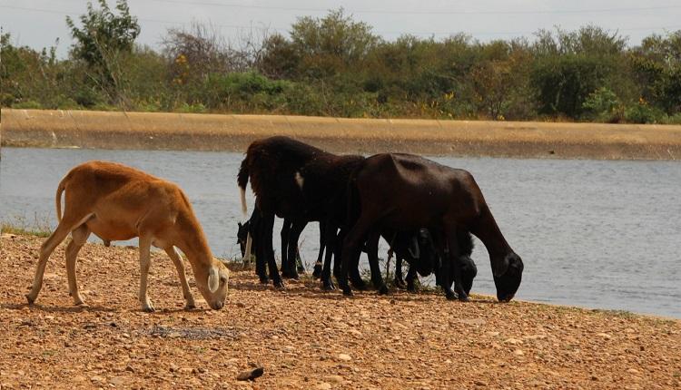 Prolonged drought impacting Brazil's Minas Gerais state